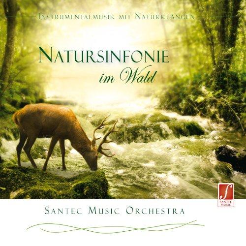 CD Natursinfonie im Wald: Tauchen Sie ein in die erfrischende Waldatmosphäre und entspannen Sie.